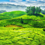 Facts About Munnar