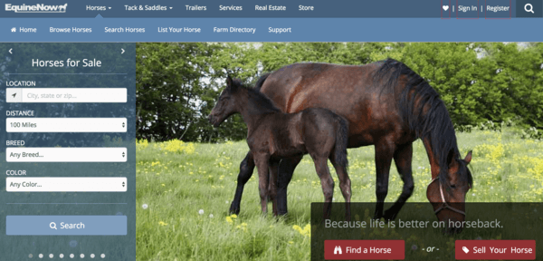 picture of equinenow.com homepage