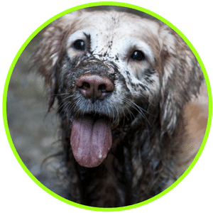 picture of dirty dog