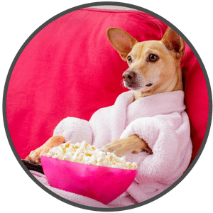 picture of a dog relaxing on couch