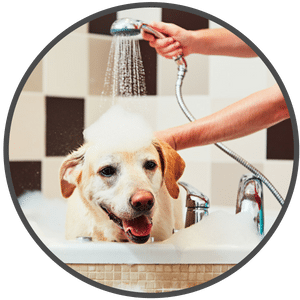 picture of a dog getting a bath