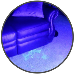 picture of dog stains under a blacklight