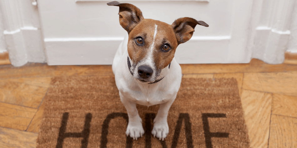 picture of a dog at the front door