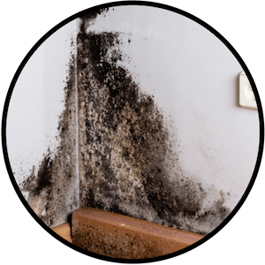 picture of black mold growing on a wall