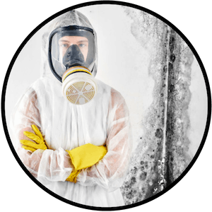 picture of professional mold removal