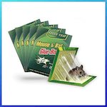 picture of TheNoBuzz Mouse Rat Glue Trap