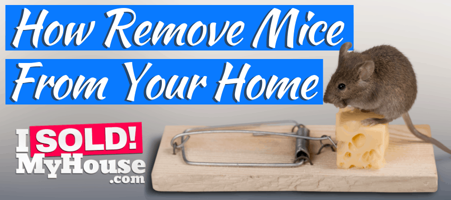 picture of getting rid of mice with a mouse trap