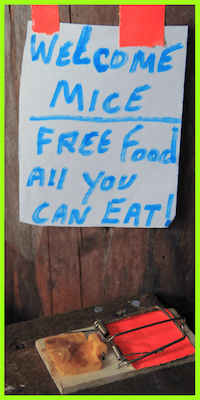 picture of a mouse trap with a sign for free food