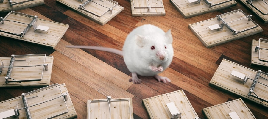 picture of a mouse in the middle of lots of traps