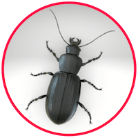 picture of a beetle