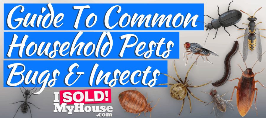 featured image for household pests article