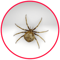 picture of a spider