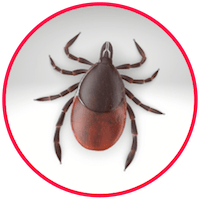 picture of a tick