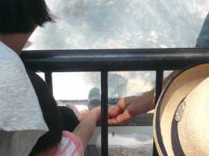 市川市動植物園のカワウソの手