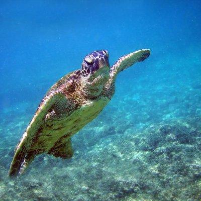 Turtle economic value