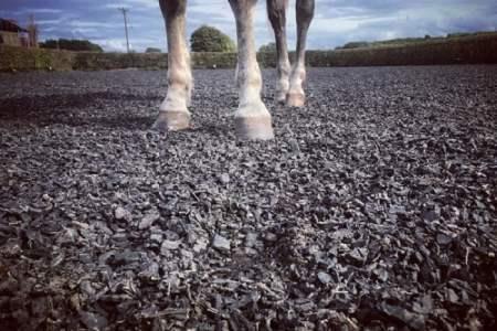 Horse standing on shredded tyres