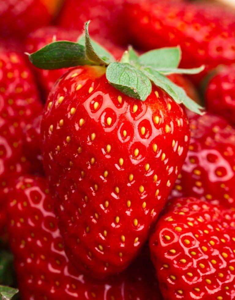 Eversweet Strawberry Plant Ison S Nursery Amp Vineyard