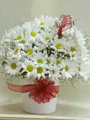 seramik vazoda papatyalar ısparta yiğitbaşı çiçekçilik