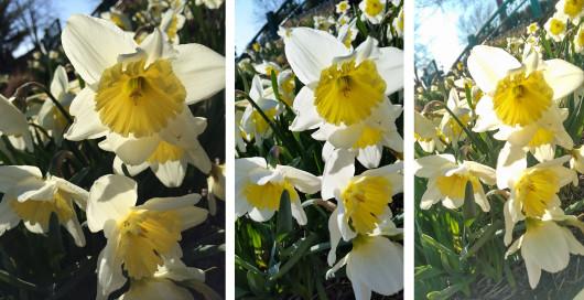 5s_m8_s5_photo_comparison_16