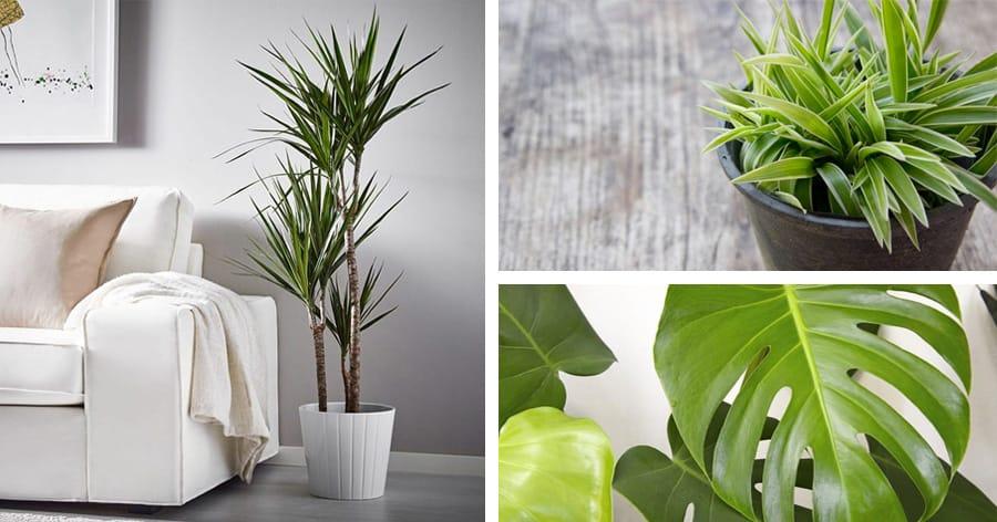 Le 10 piante da appartamento pi facili da curare  Ispirando