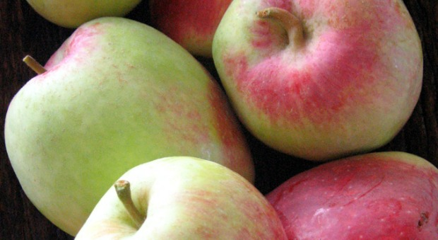 Anna apples.