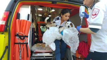 MDA paramedic Liat Mizrahi putting Chupa on the ambulance as Senior EMT Katy Shussman holds the IV bag. Photo courtesy of MDA Spokesman's Office