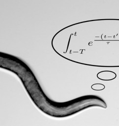 worms perform complex math calculations to find food [ 1600 x 900 Pixel ]