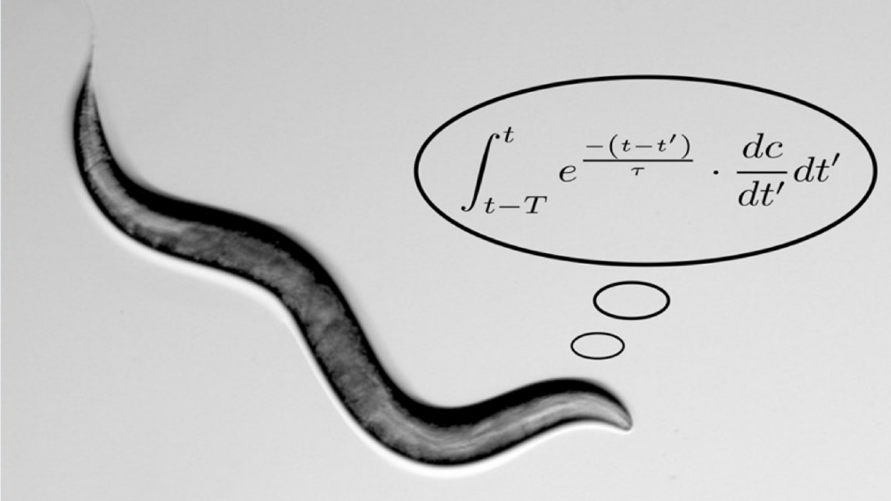 medium resolution of worms perform complex math calculations to find food