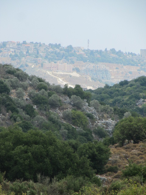 Nachal Meron with Tsfat in background