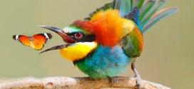 http://www.duskyswondersite.com/category/animals/