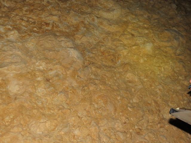 Ammonite Wall