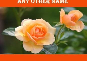 Palestinian Arab Name