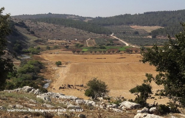 agricultural fields belonging to Ras Ali, Bedouin town