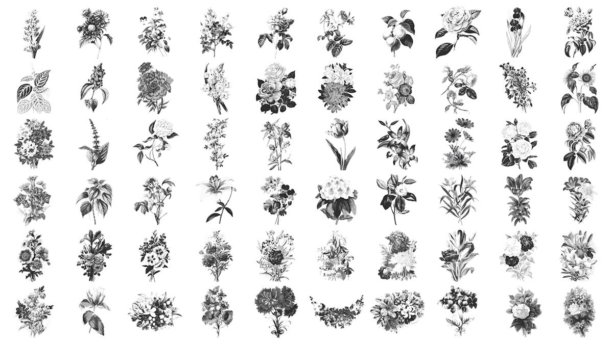 Recursos de flores vintage