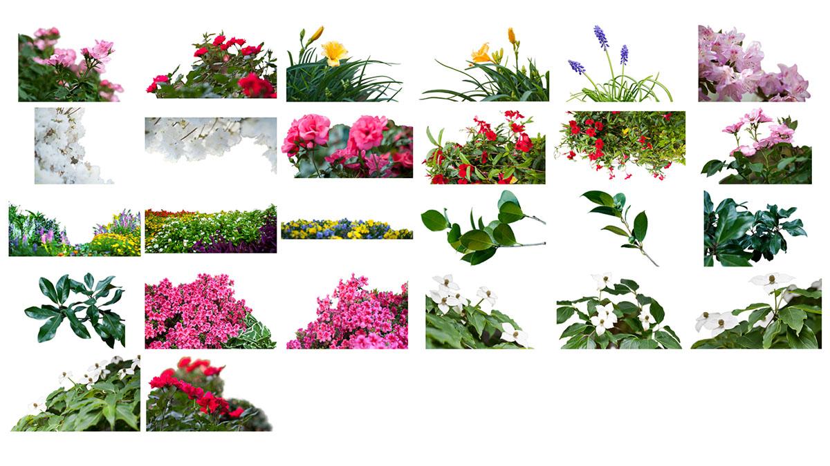 Superposición de flores