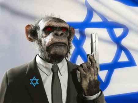 monkey israel