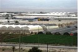 Greenhouses in the Jordan Valley