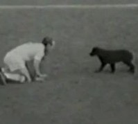 jimmy-greaves-and-dog