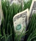money growing in wheat field