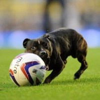 goodison dog