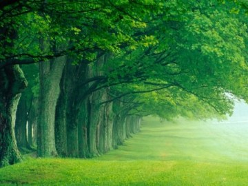 Beautiful-forest-natures-seasons-17593939-1024-768