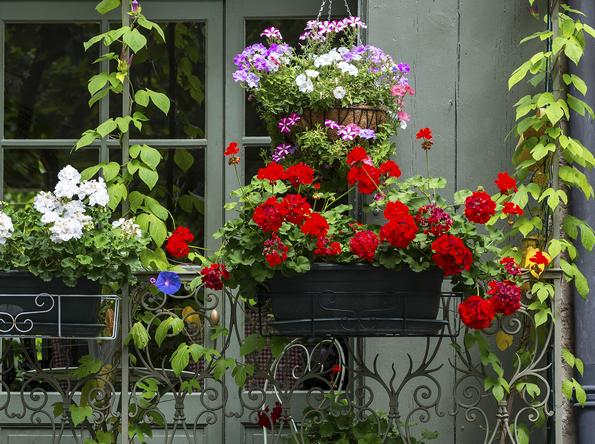 Le piante da balcone colorate e profumate  ItaEuropaUnita Istituto Tecnico Agrario Paritario