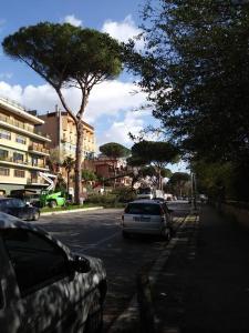 alberi roma