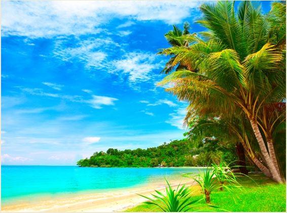 Gigantografia esclusiva Paesaggio tropicale