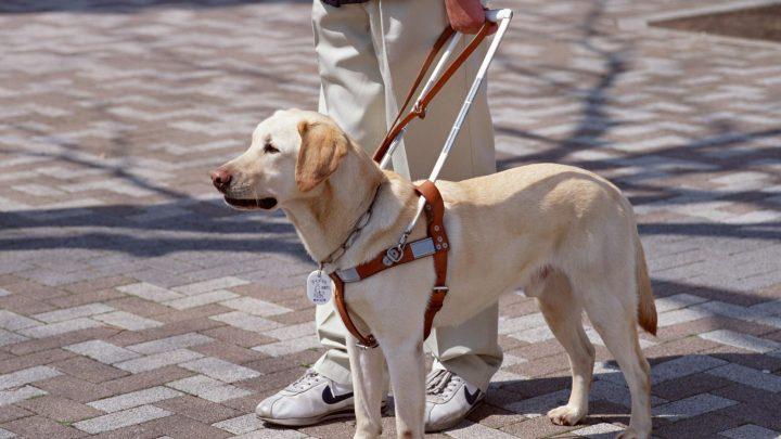 16 ottobre Firenze: 10a Giornata Nazionale del Cane Guida