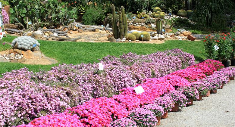Orto Botanico di Napoli : un percorso per non vedenti per riconoscere le piante