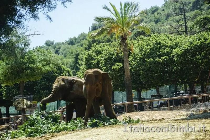 Zoosafari di Fasano: come funziona. itinerario. prezzi. orari | Italia con i bimbi