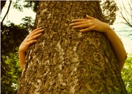 Should I plant a tree or consume less?