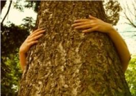 Pianto un albero o consumo di meno?