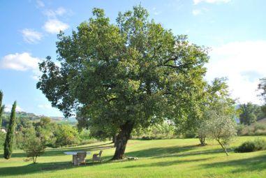 De grote tuin met mooie bomen